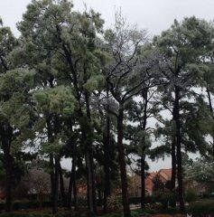 WOCC-Pines-In-Winter-1.jpg