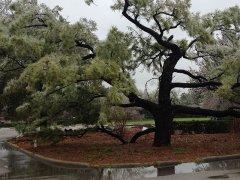 WOCC-Pines-In-Winter-2.jpg