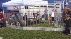 Petting-Zoo-1.jpg