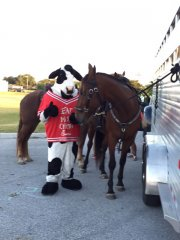 HPD---Officer-Moose-and-Cow-Meet.jpg