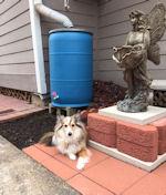 rainbarrelanddog